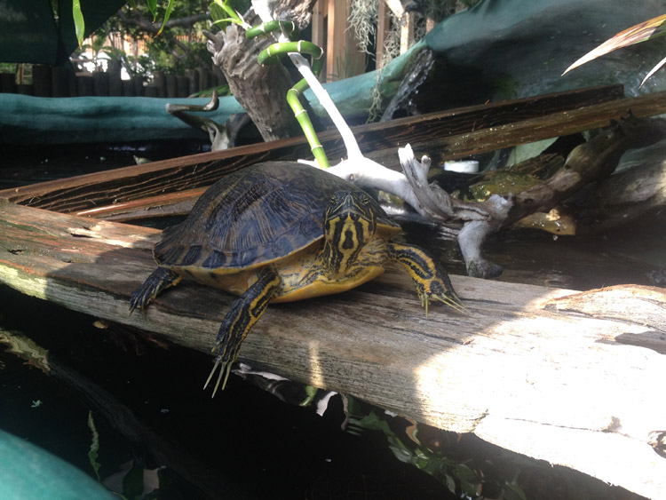 Celebrate World Turtle Day with our friends at the Freshwater Bayou!