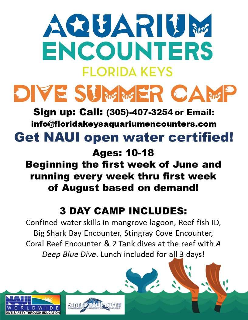 dive camp flyer 2021